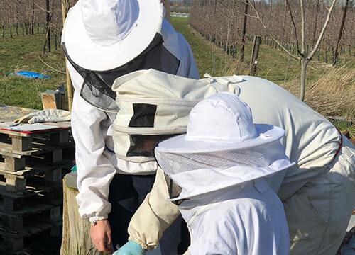 Peterschap van onze bijen Bee At den Hof