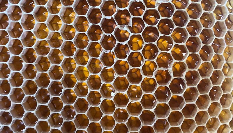 bee at den hof bijenkast raam