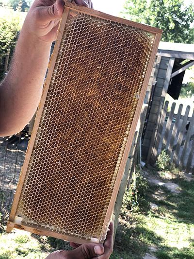 Honingraam - Bee at den Hof