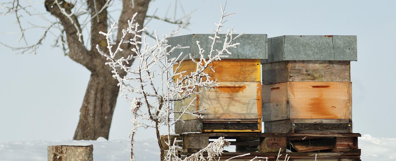 Winter in de bijenakst